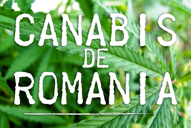 Cresterea vegetativa a cannabis-ului - Informatii