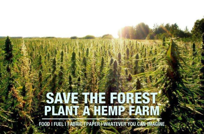 save-forest-plant-hemp-farm