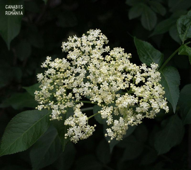 floridesoc
