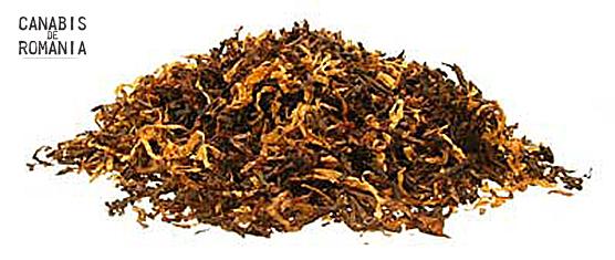 (Nicotiana tabacum)3